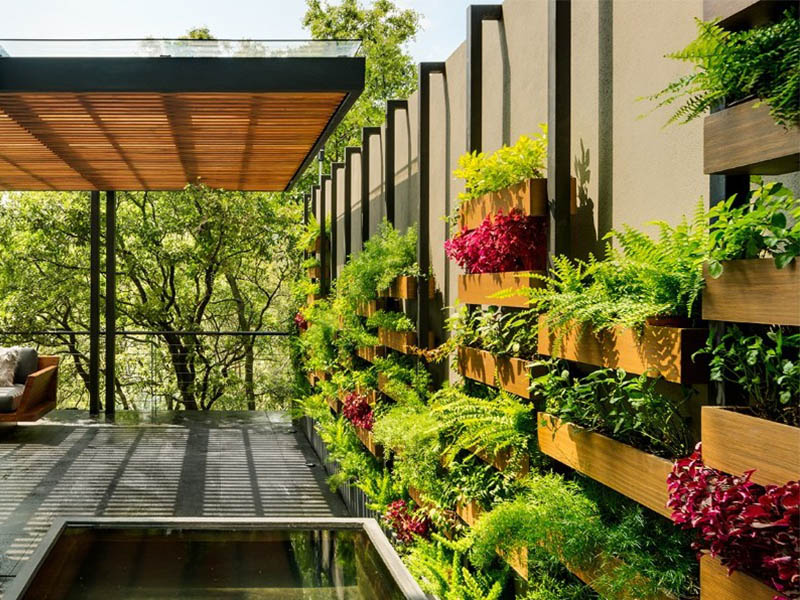Vertical Garden and Other Garden