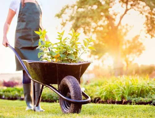 Get Your Backyard Ready for Summer with these 5 Tips!