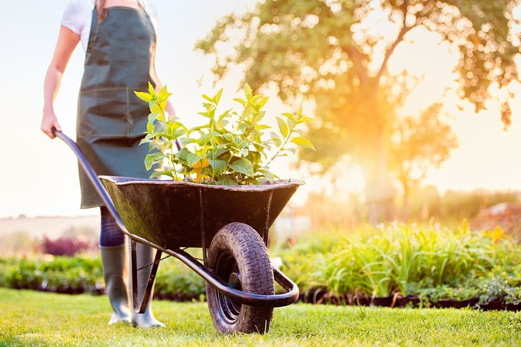 Get Your Backyard Ready for Summer with these 5 Tips 1