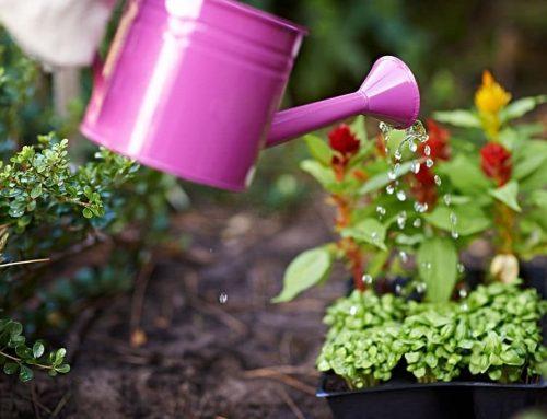 5 Top Tips to Avoid Weeds in Your Garden