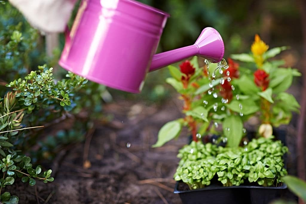 Tips To Avoid Weeds In Your Garden