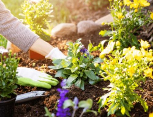 The Do's and Don'ts of Summer Landscaping