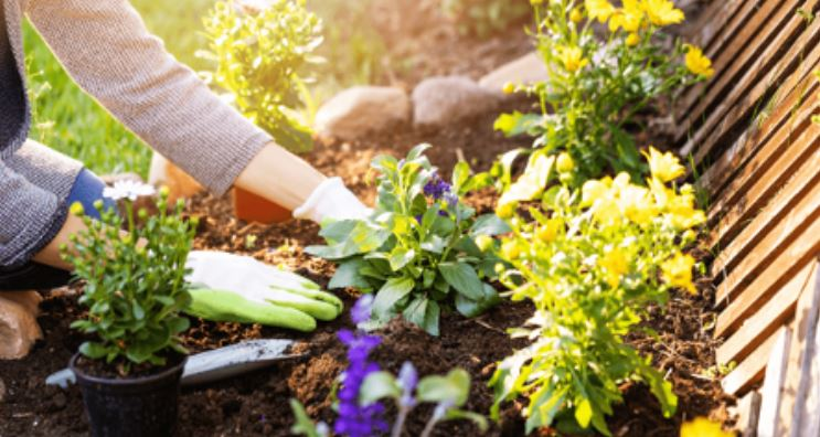 The Dos and Donts of Summer Landscaping